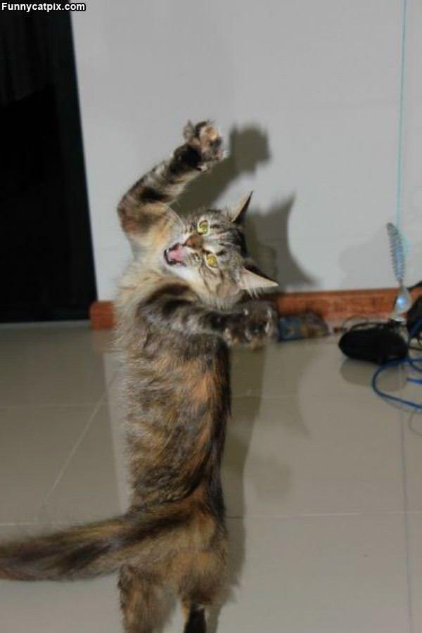 猫步劲舞 - 雪山 - .