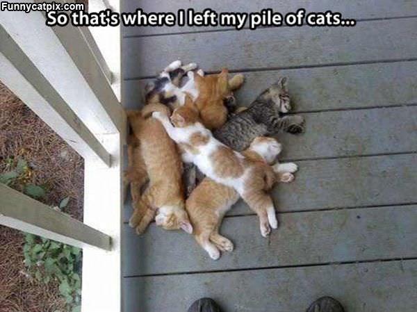 猫的世界 - 雪山 - .