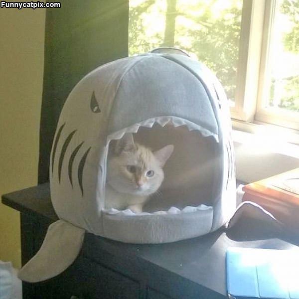 My Shark Bed