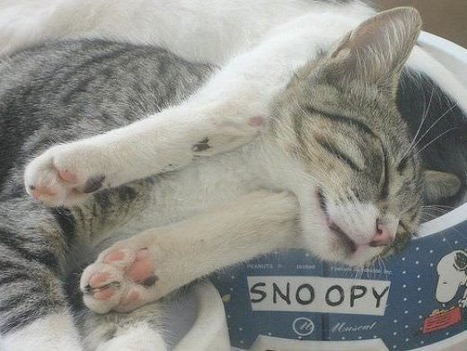 My Sleeping Spot