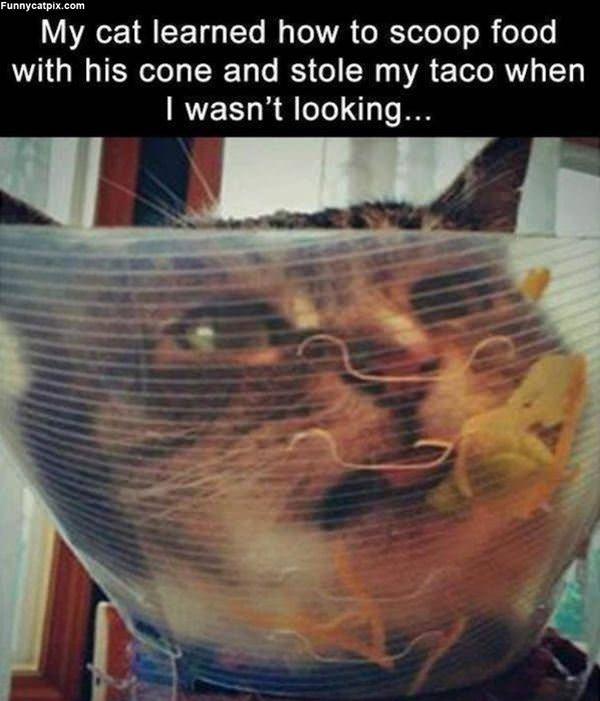 My Taco Now