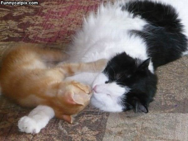 Napping Together