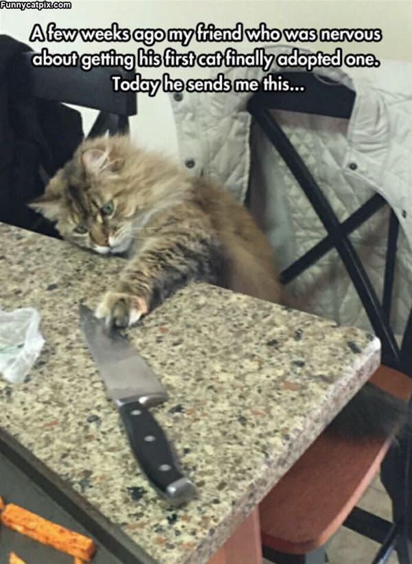 Nervous About My Cat