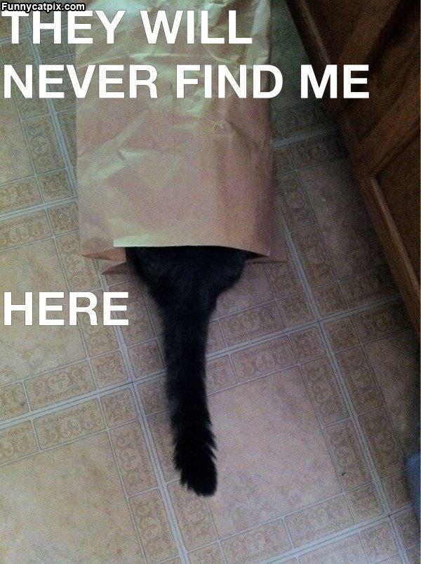 Never Find Me