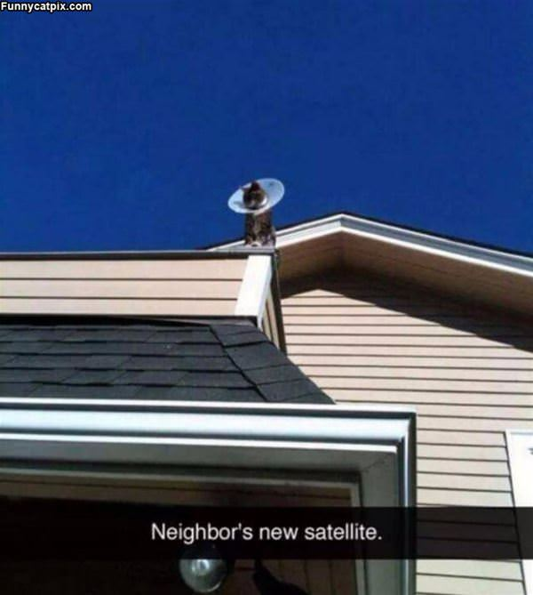 New Satellite