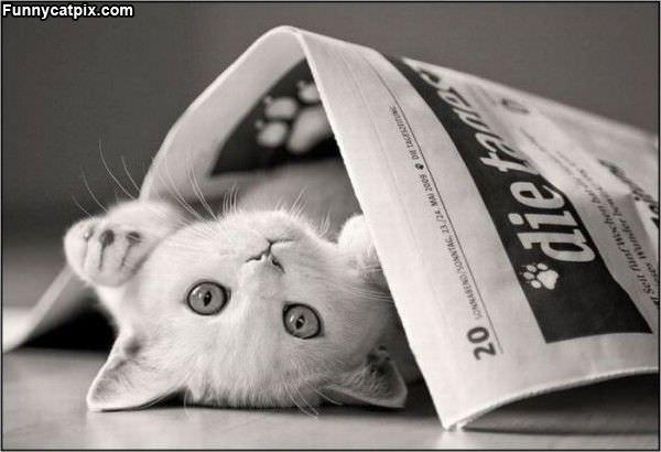 Newspaper Kitten