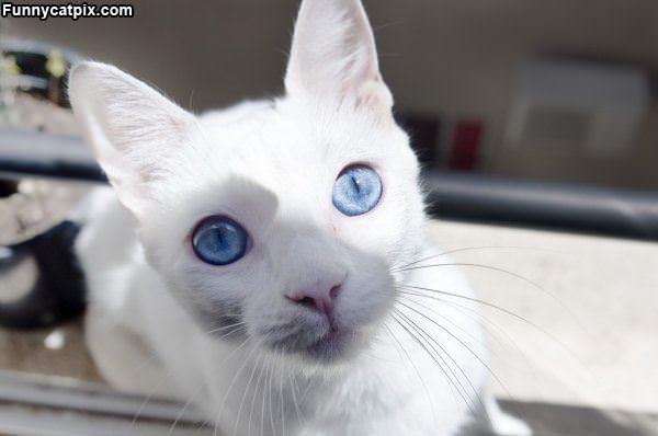 Nice Blue Eyes