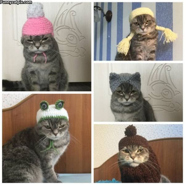 Nice Cat Hat
