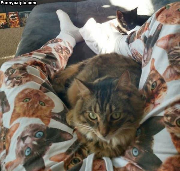 Nice Cat Pajamas