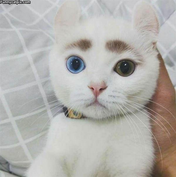 Nice Eyebrows