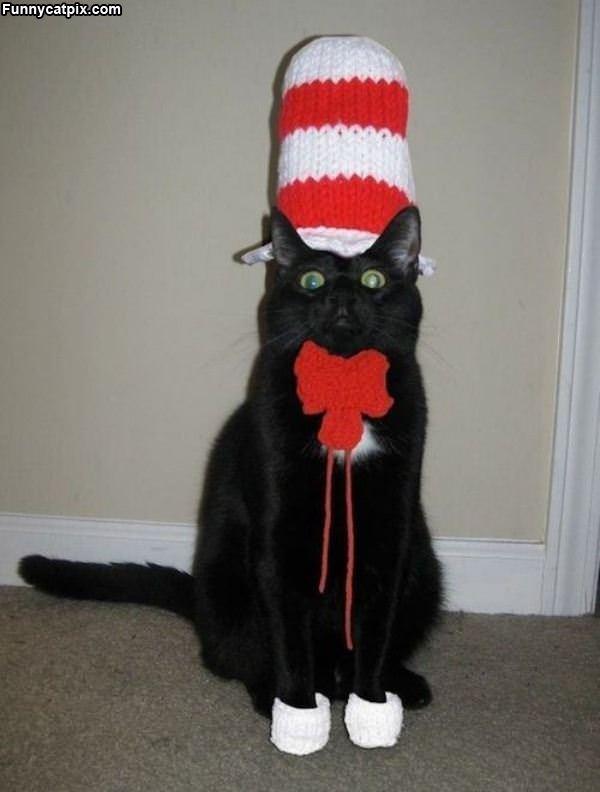 Nice Hat Cat