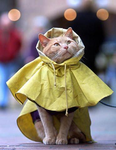 Nice Rain Coat