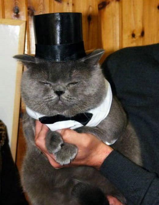 Nice Top Hat