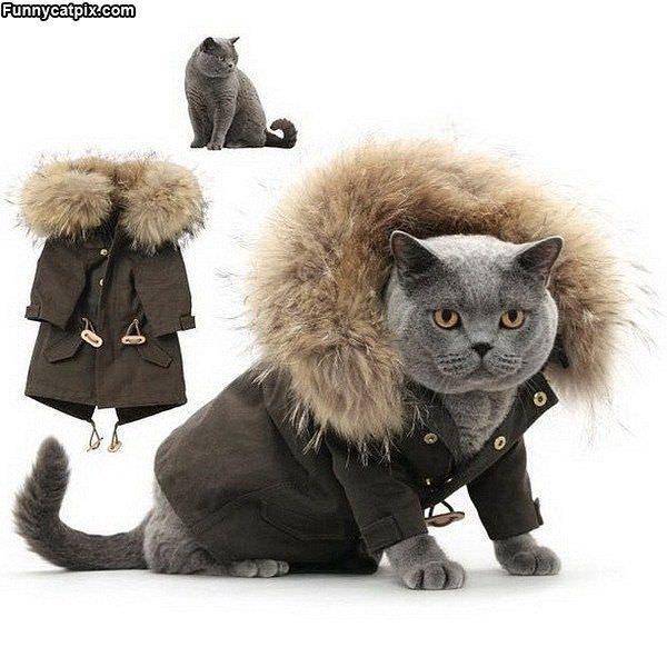 我的新款冬装 - 雪山 - .