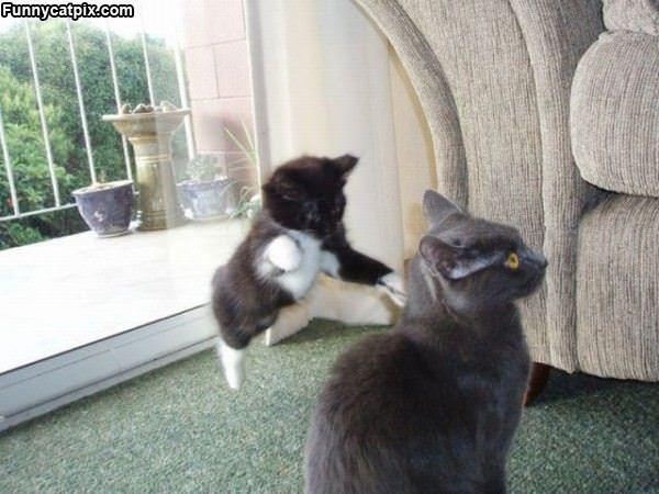 Ninja Attack Kitten