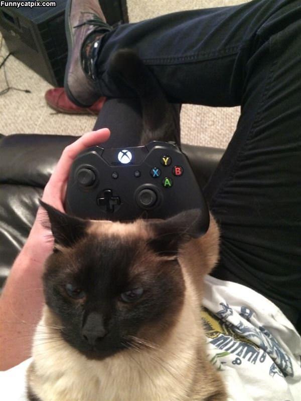 No More Xbox