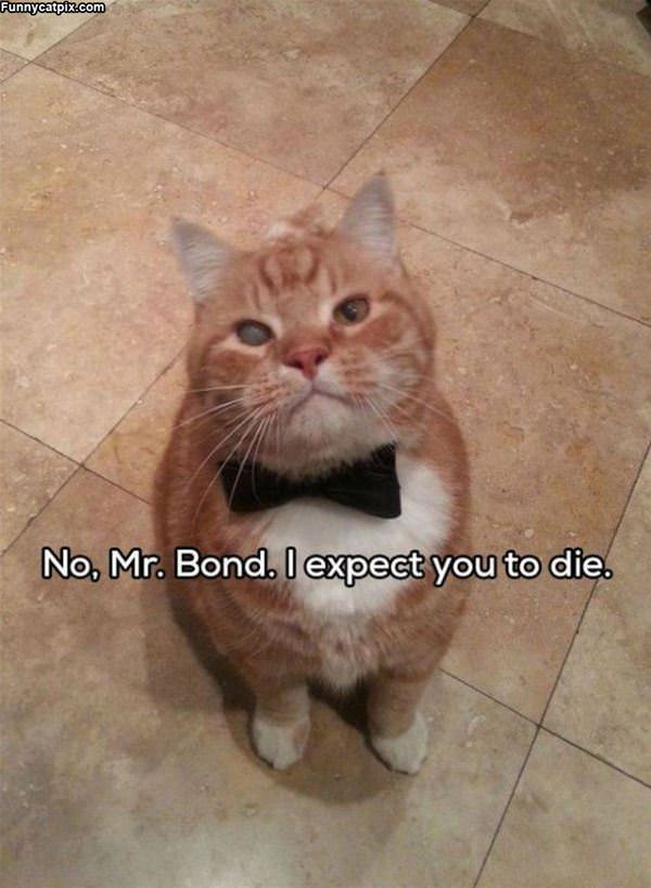 No Mr Bond