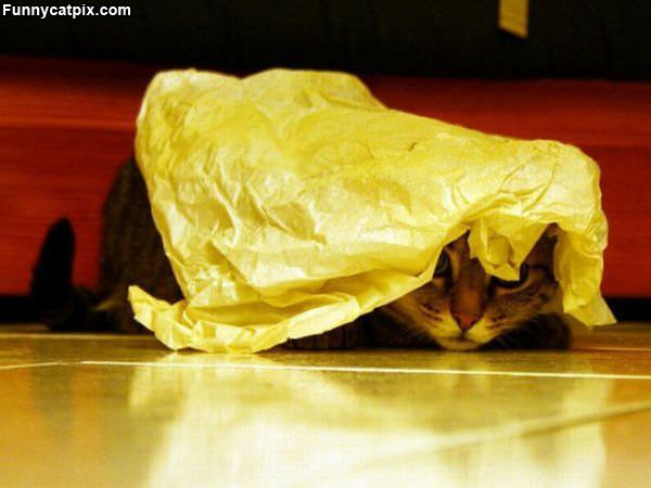 Nobody Can See Me