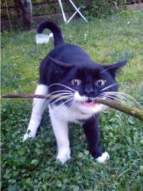 Nom Nom My Stick