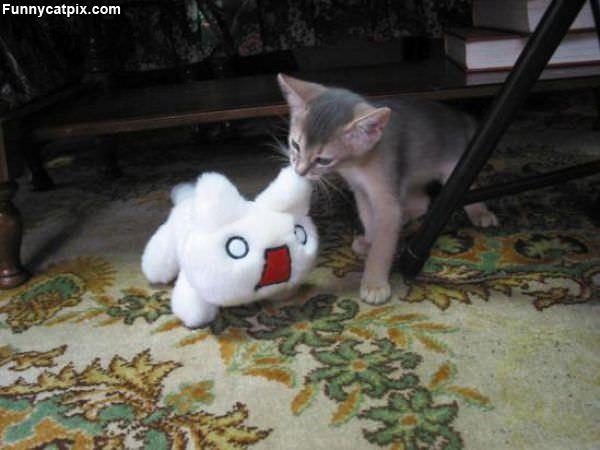 Nom Nom Nom Cat