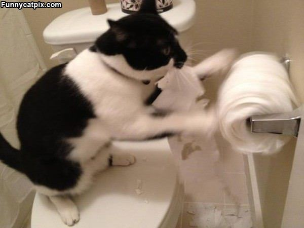 Nom Nom Nom Toilet Paper