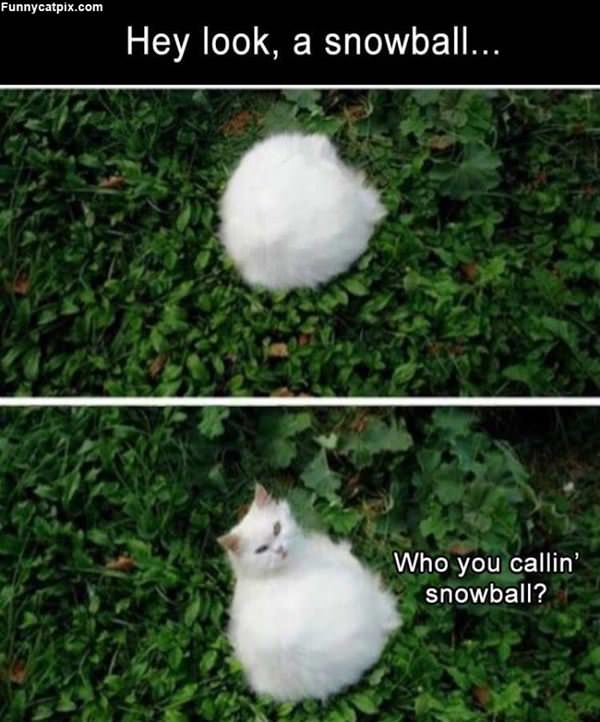 Not A Snowball