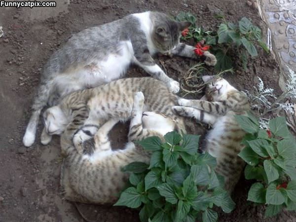 Oh Look A Pile Of Cats
