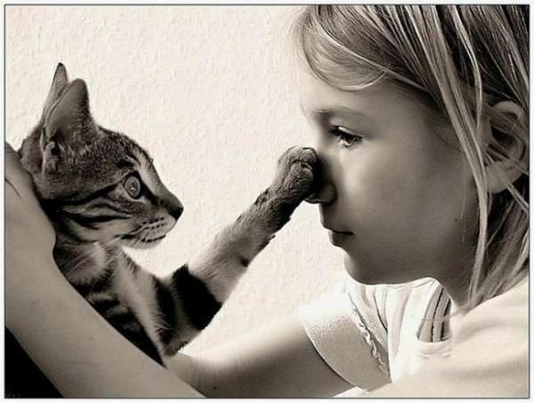Ohh I Got Your Nose Cat