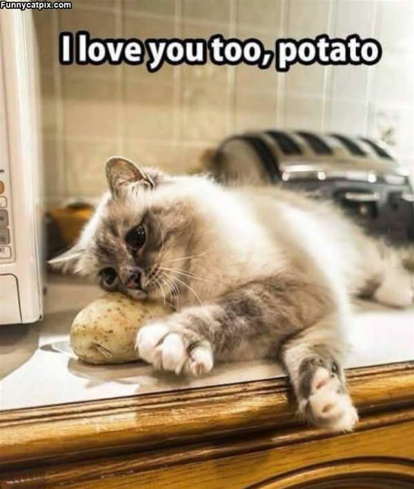 Ohhh Potato