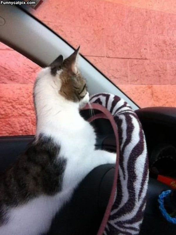 我开车 你放心 - 雪山 - .