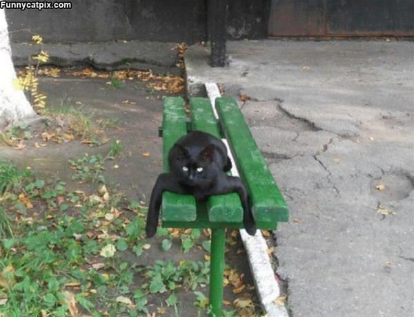 On The Green Bench