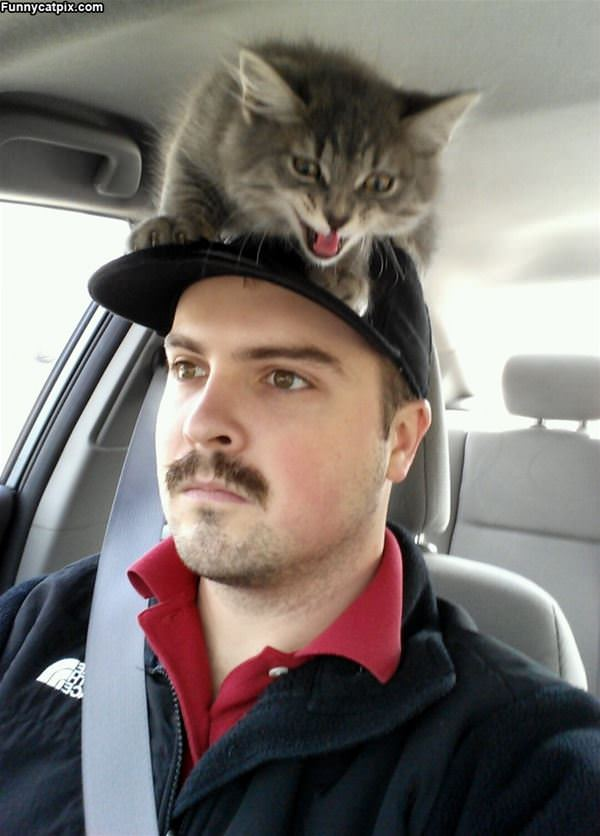 On The Hat