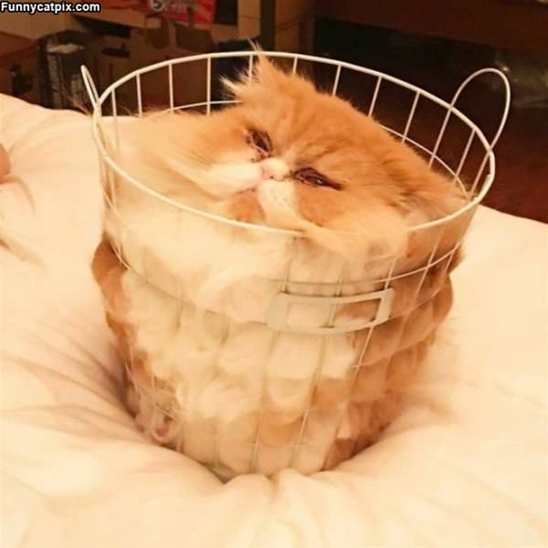 One Basket Of Cat
