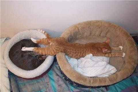 One Bed Isnt Enough
