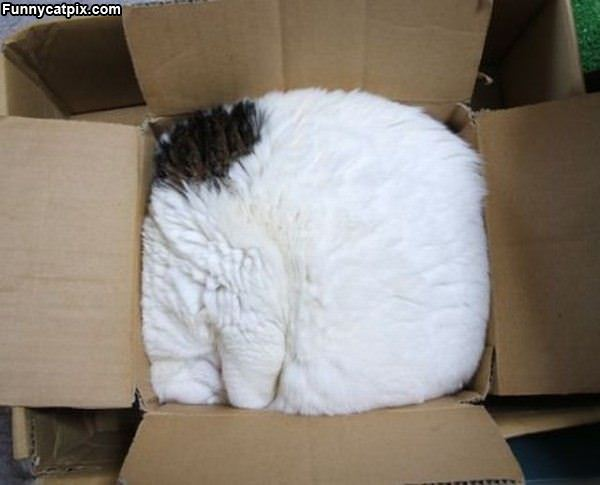 Imagem do dia - Página 36 One_Box_Of_Cat269