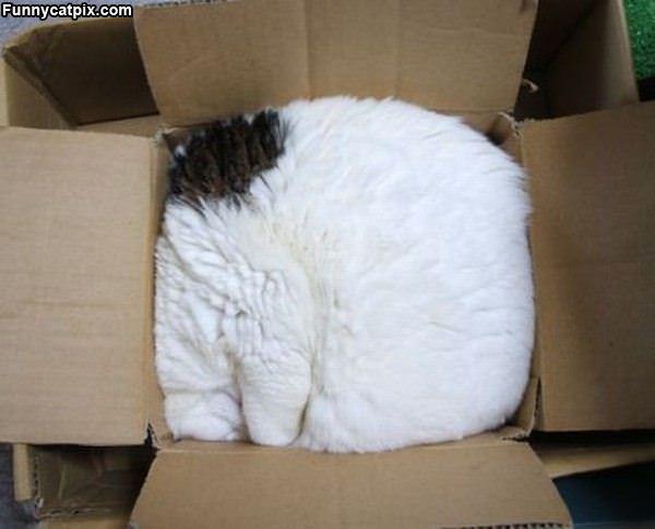 One Box Of Cat