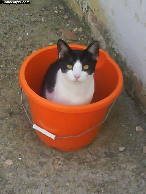 One Bucket Of Cat