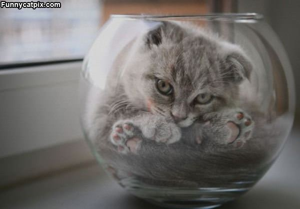One Cute Bowl Of Cat