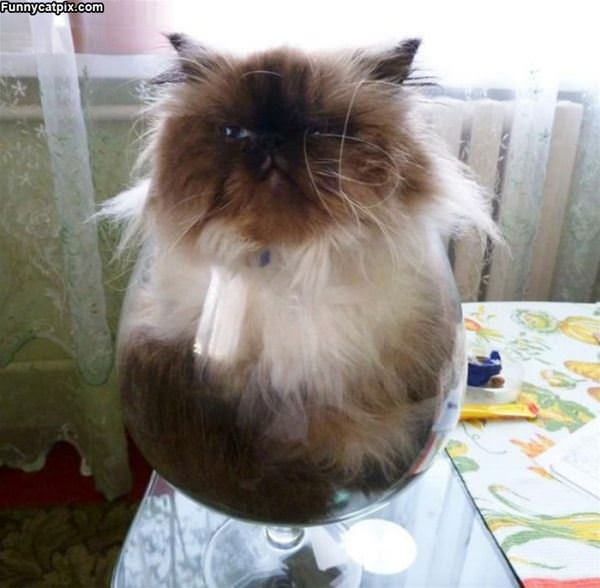 One Giant Bowl Of Cat