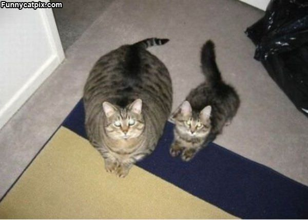 One Is A Fat One