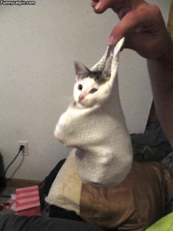 One Sock Of Kitten