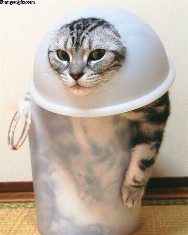 One Trash Cat Of Cat