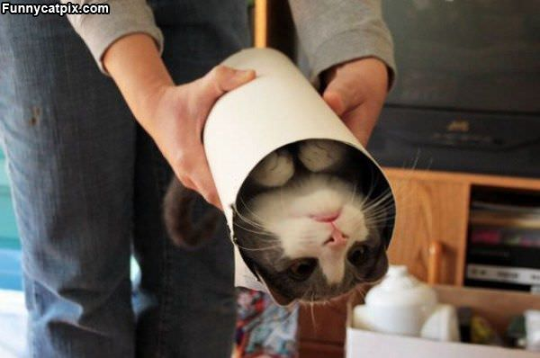 One Tube Of Cat