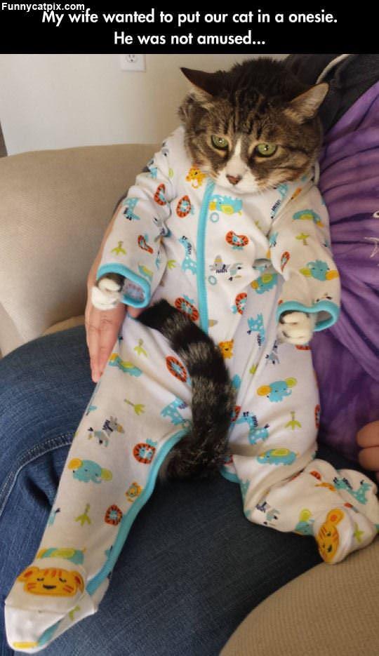 Onsie Cat