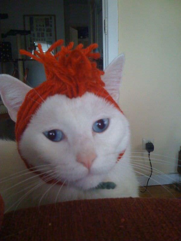 http://www.funnycatpix.com/_pics/Orange_Wrap.jpg