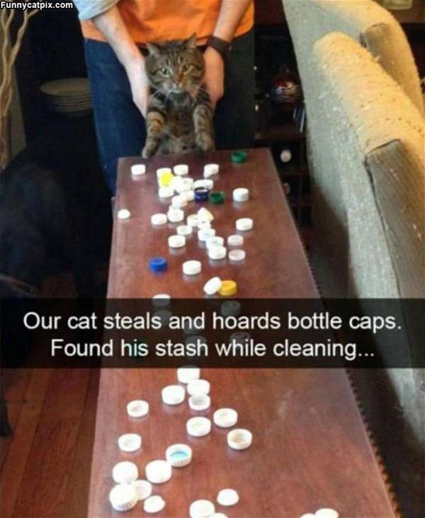 Our Cat Steals Bottle Caps