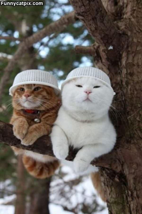 我们不喜欢傻呼呼的帽子 - 雪山 - .