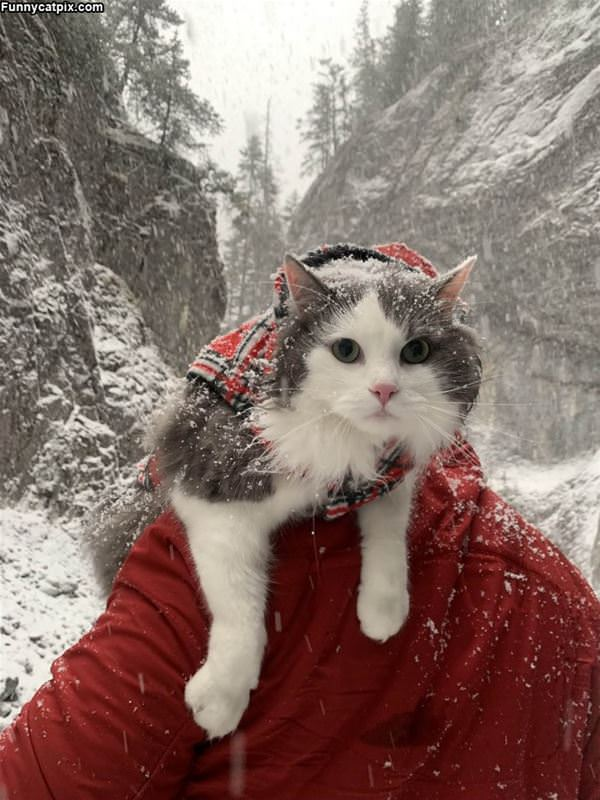 Out In The Snow