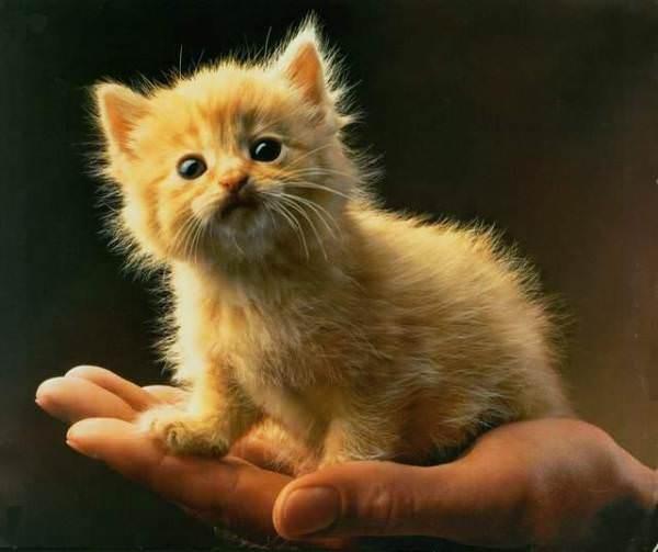Palm Kitten