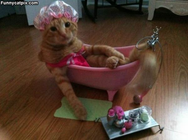 Pampered Kitty